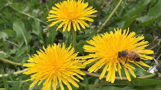 Parrainez les abeilles